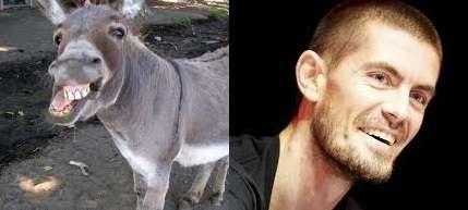 donkey-gus